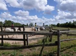 Grande variétés d'activités équestres
